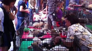 Bangkok Living&Travel - Shopping Chatuchak Weekend Market Part 3