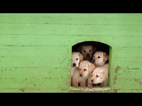 H Λούσι σώζει τα κουτάβια: Η σκυλίτσα που νίκησε τα pet shop