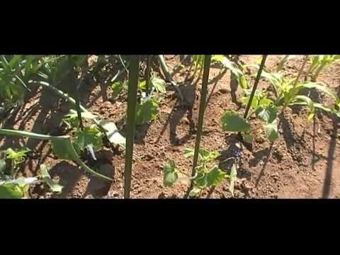 20130428キュウリ・トマト・ナス栽培開始