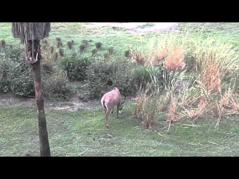Disney World Hotels-Animal Kingdom Lodge – Savannah View (Disney World)