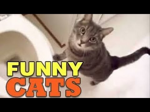 Funny Cats Vines – Funny Videos Compilation 2014 – HD ✔