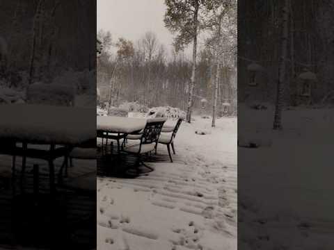 Snow comes to Saskatchewan
