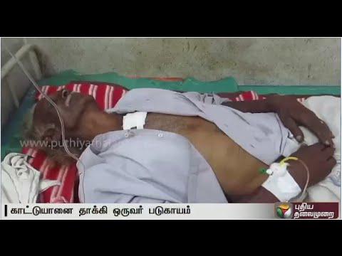 Wild-Elephant-Attack-old-man-injured-near-Gudalur