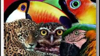 ARAUTOS DO REI - A HISTÓRIA DOS ANIMAIS