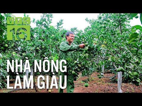 Kỹ thuật trồng cây ăn quả theo hướng hữu cơ | VTC16 - Thời lượng: 4 phút, 3 giây.