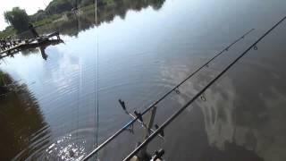 Ловля карпа на поплавок. Рыбалка 2013. Рыбалка на карпа.
