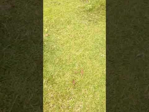 _Tu_Chale__FULL_VIDEO_Song_________Shankar,_Chiyaan_Vikram___Arijit_Singh___A.R_ (видео)