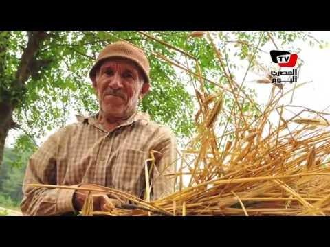 «الزلاقي» عن قضية «القمح التائه»: من المسئول عن تعطيل مشروع يدعمه الرئيس؟