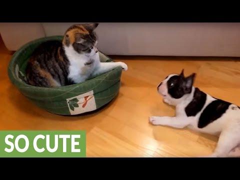 cane-e-gatto-perfetti-complici