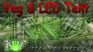 Veg and LED tents 2/12/2017 by  NVClosetMedGrower