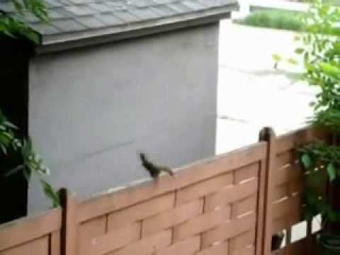 Squirrel Jump Fail