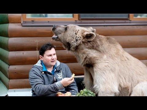 他們從熊兒子3月大的時候就養他,看到他們一起在餐桌上吃下午茶時才發現原來熊根本就是人!