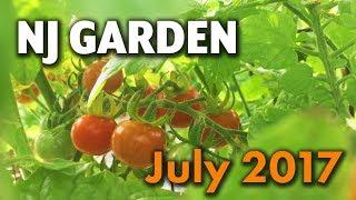 Cedar Raised Gardening Beds - http://amzn.to/2kpEza0 Here's an update of my New Jersey backyard garden from July 2017.
