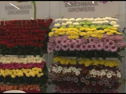 Rueda de negocios en Proflora 2011 arrojó expectativas por US$13,9 millones