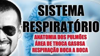 Sistema Respiratório - Anatomia dos Pulmões e RCP - Fisiologia - VideoAula 027