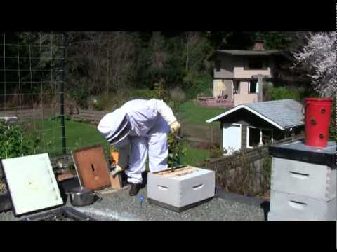 CMay 16/11 Senga's Vlog – Checking Bee Hive Progress for New Laying Queen Bee
