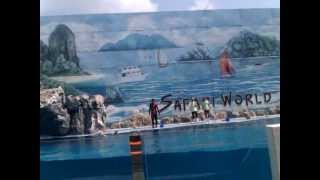 Dolphin Show @ Bangkok Safari World Zoo 2012