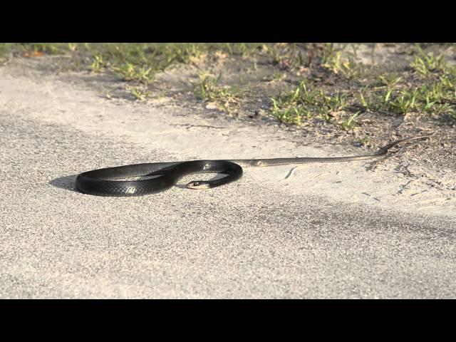 Lần đầu tiên thấy rắn bị động kinh