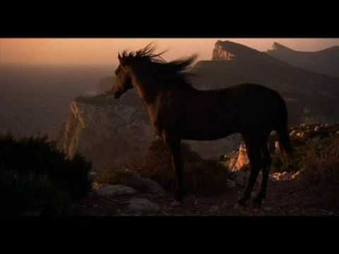 Stallion - Scenes from film Black Stallion, music: The Voice, Eimear Quinn _____ 100.000 views!! thanks to all of you who watched and liked my video :)