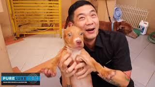 Video Kisah Jacko Pitbull Mantan Anjing Petarung MP3, 3GP, MP4, WEBM, AVI, FLV Mei 2019