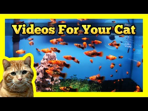 Videos for Cats &#8211; Spotted Orange Mollies in a Fish Tank