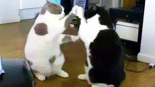映っているみたい!ミラーキャット/キリン「午後の癒しの動物園」動画6