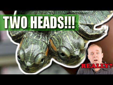 I GOT A TWO HEADED TURTLE!! WOW!!! | BRIAN BARCZYK