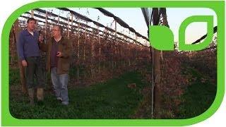 #1395 Redloveproduktion in der schweizer Obstbauanlage von Beart Lehner