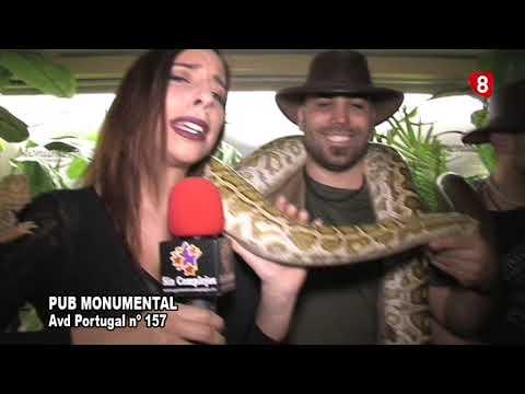 PUB MONUMENTAL, ANIMALES EXOTICOS 2018