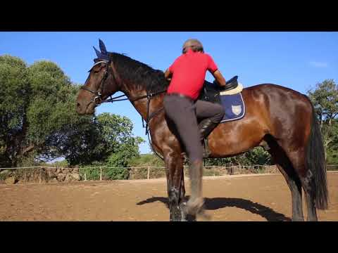 Horse riding training in Sardinia