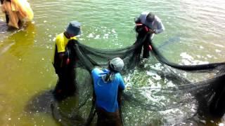 Endau Malaysia  city pictures gallery : Peroses penangkapan udang Kolam Mhd Haslin ENDAU mersing johor Malaysia