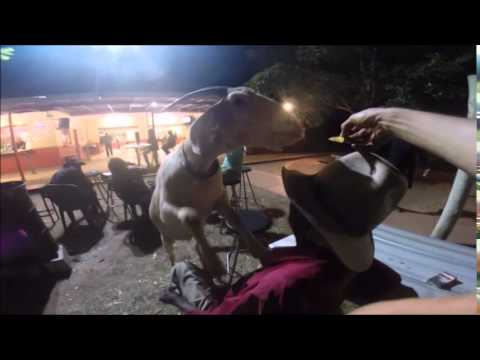 gary - Gary the goat visits Australia's most chilled out bar. Kalkaringi, Northern Territory. Subscribe: http://full.sc/1lUv8Nr Facebook: http://full.sc/1o2WsWI Buy Shirts!: http://full.sc/1sSIqOw...