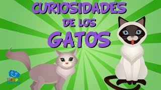 ¿Sabías que los bigotes de los gatos no son pelos normales? Efectivamente los bigotes de los gatos no son pelos normales sino terminaciones nerviosas. Se llaman vibrisas y detectan a través del aire muchas cosas… son como una especie de radar. Contribuyen, junto al olfato y a la vista,  a que los gatos identifiquen olores o a que calculen la posición exacta de un objeto o de una presa… como este pobre ratoncito.¿Sabías que los gatos de tres o cuatro colores son hembras?Cuando veas un gato con un pelaje de tres o cuatro colores ten la seguridad de que es una hembra. Hay casos extrañísimos de algún macho tricolor pero estos siempre son estériles es decir no pueden tener hijos. Sin embargo las gatas pueden tener de 3 a 7 gatitos cada cuatro meses y durante toda su vida pueden llegar a tener hasta cien gatitos…¡Qué barbaridad!¿Sabías que los gatos son uno de los animales más limpios que existen?Los gatos le dedican al aseo muchos momentos del día. Inmediatamente después de comer los gatos siempre se lavan. Es un instinto de supervivencia ya que así sus depredadores, como por ejemplo los perros, no les huelen y evitan ser atacados. También, cuando hacen sus necesidades, siempre las entierran. De esta manera entierran su rastro y evitan ser localizados y atrapados por otros animales.Aunque a mucha gente no les gusten los gatos a nosotros nos parecen animales fascinantes y maravillosos. Nos encantan los mininos.