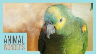 How To Nebulize Your Bird by Animal Wonders