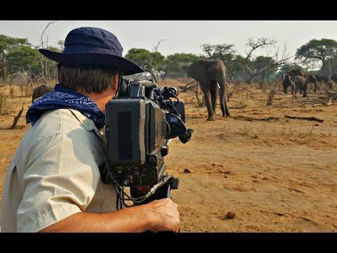 Somalisa Acacia, Land of The Giants