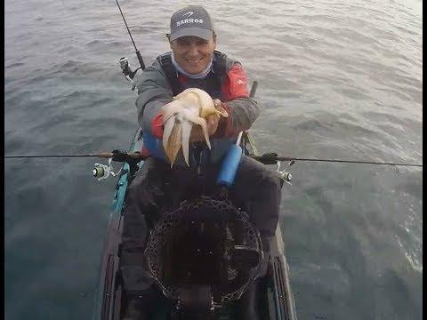 Pesca de Chocos no Sado - Setúbal ( 2018)
