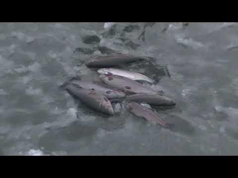 Видео отчет о рыбалке за 30 ноября 2019