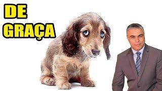 Linda Reflexão - O Cachorro grátis