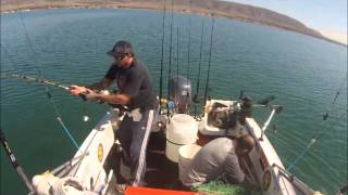 Port Augusta Australia  city photos : Big bruiser 41kg Yellowtail Kingfish. Port Augusta South Australia