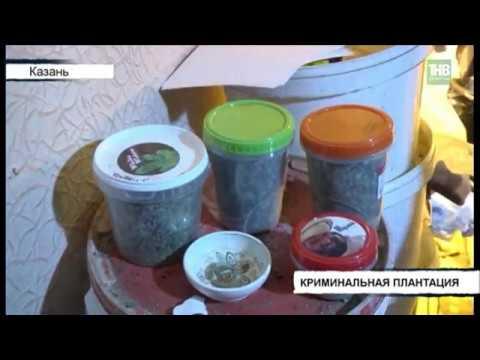 Плантацию марихуаны обнаружили в одной из обычных квартир дома по ул.Сыртлановой в Казани - ТНВ