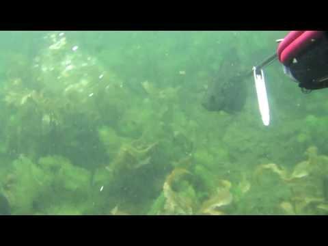 Spearfishing – Wisconsin Panfish