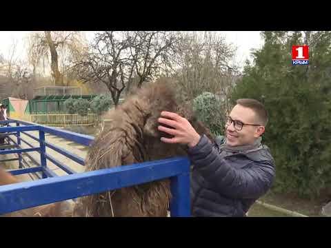 О проекте реконструкции зооуголка и зимовье субтропических растений в оранжерее Детского парка
