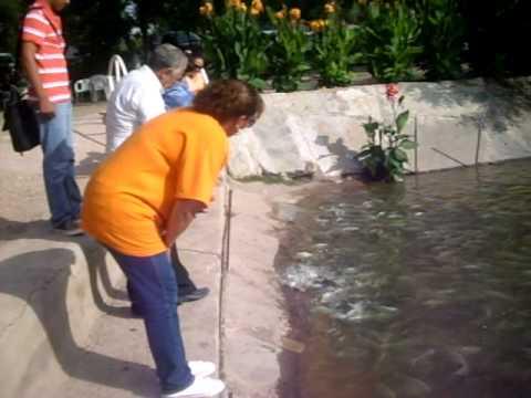 Cria de tilapia videos videos relacionados con cria de for Como criar mojarras