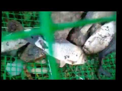 Как сделать мережку для ловли рыбы своими руками