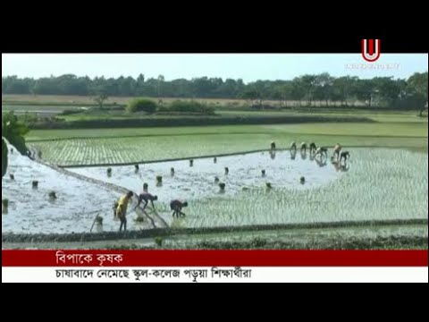 Students in farming for growers scarcity in Sunamganj (15-01-2019) Courtesy: Independent TV