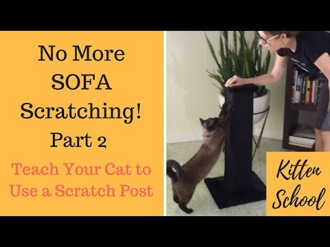 How to Teach Your Cat to Use a Scratching Post - Part 2