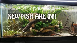 What fish did I choose? Bonus Tub Updates by Rachel O'Leary