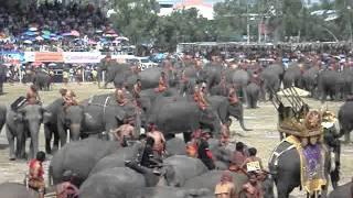 Surin Elephant Festival, Thailand, November 2011