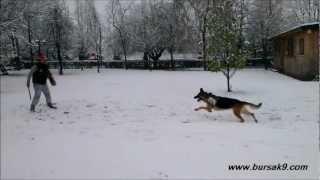 Profesyonel Köpek Eğitimi 4 videosunun kapak resmi
