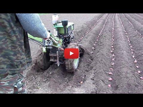 Схема посадки картофеля для мотоблока снимок